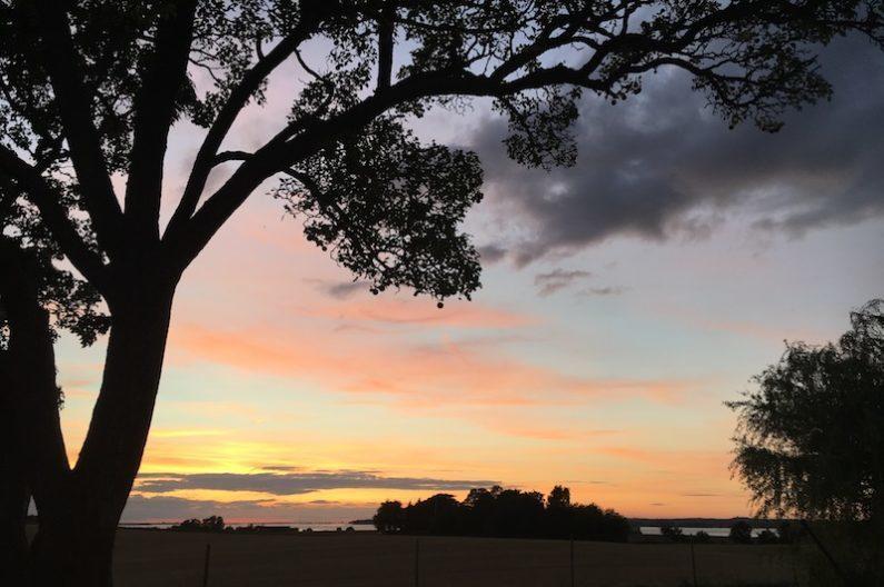 Solnedgang, pæretræet i silhuet og ud over markerne